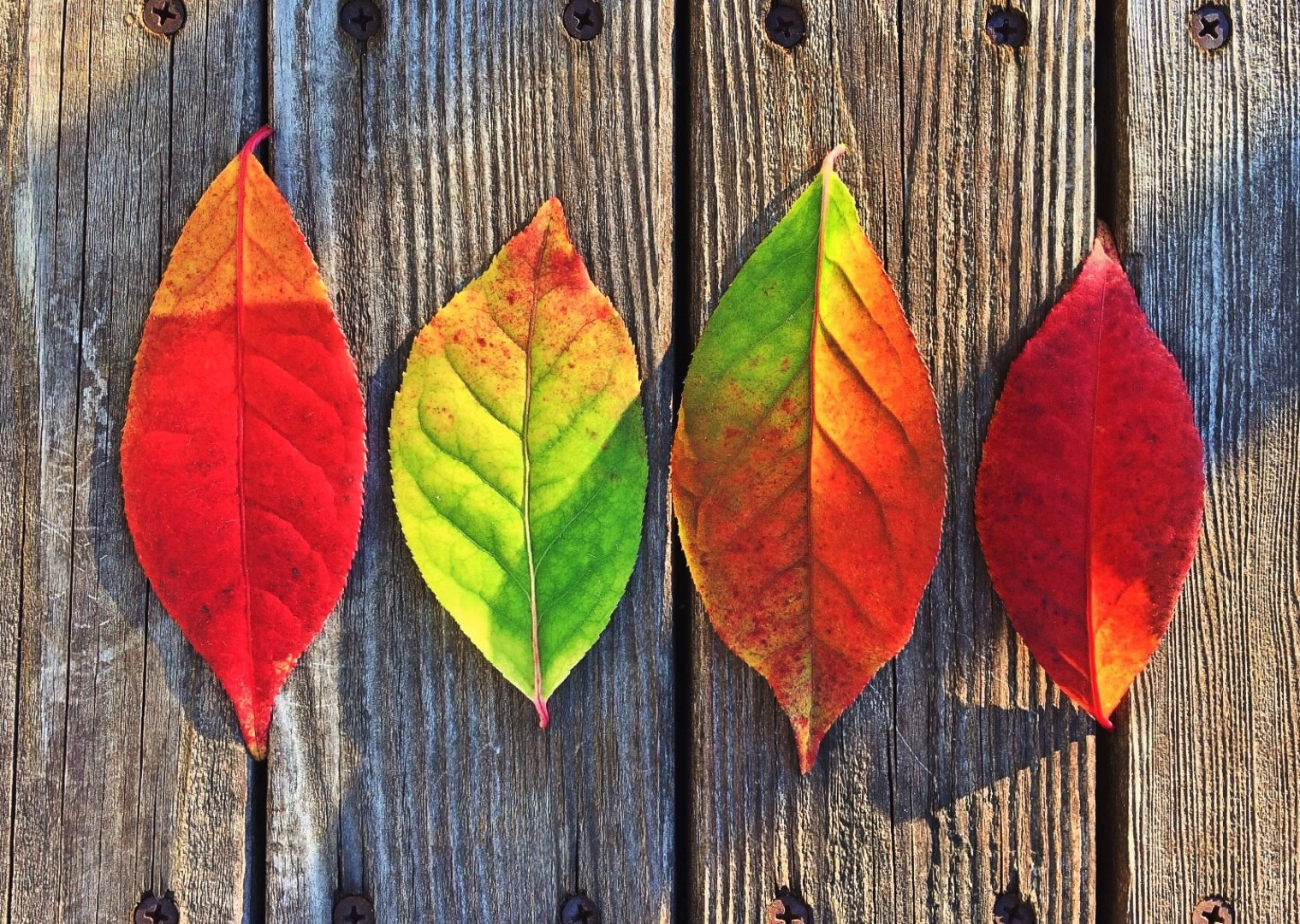 Yoga, your health and the seasons - Autumn